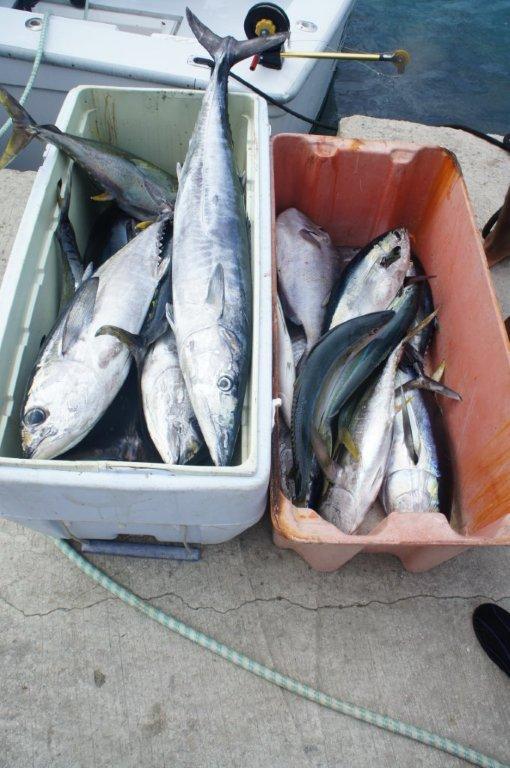 Tag_Fish_pile