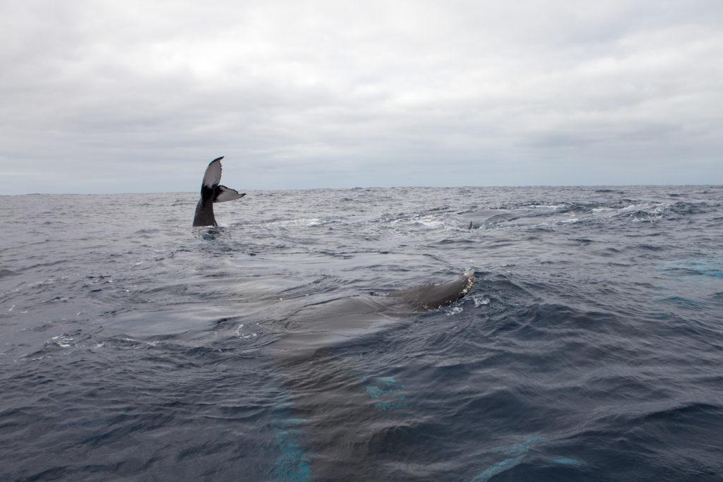 Whale 03:2015_14