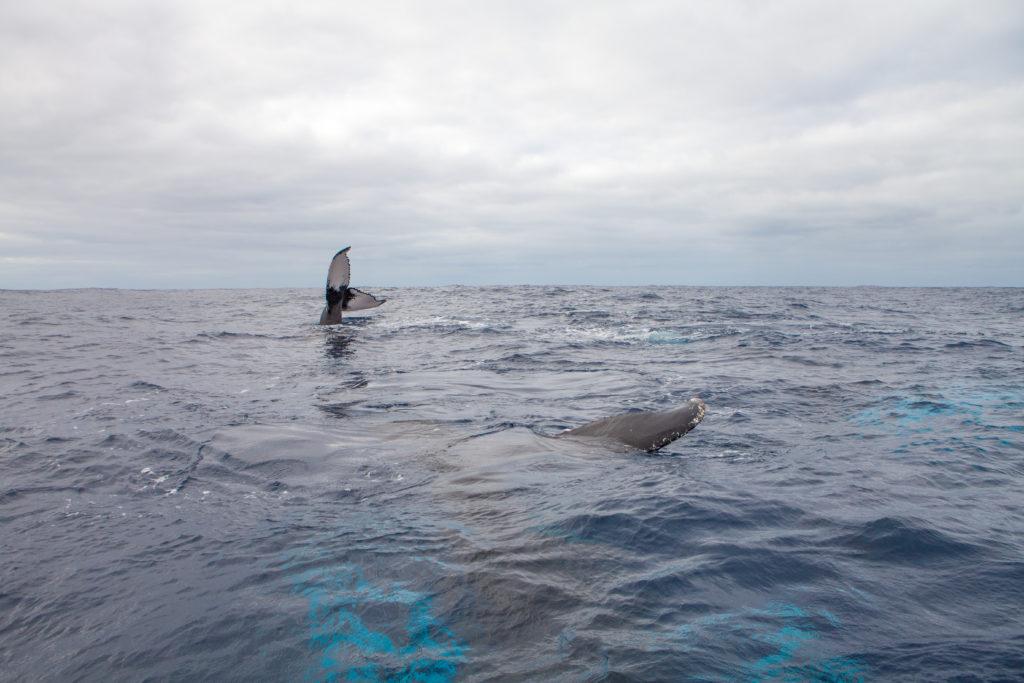 Whale 03:2015_16