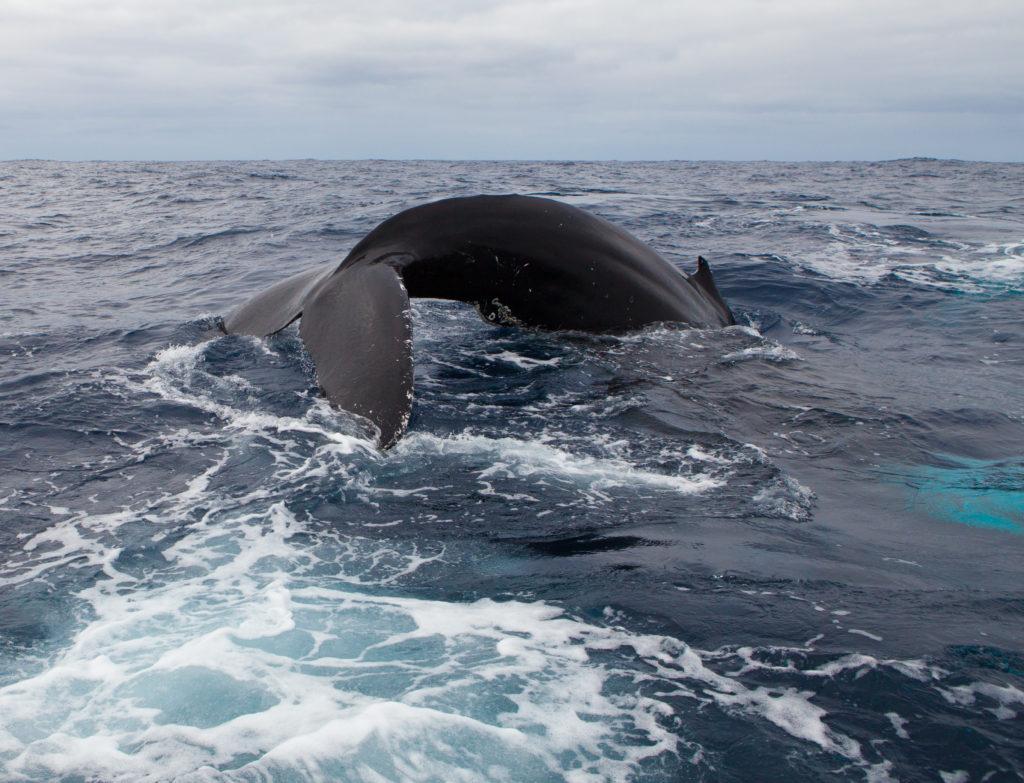 Whale 03:2015_25