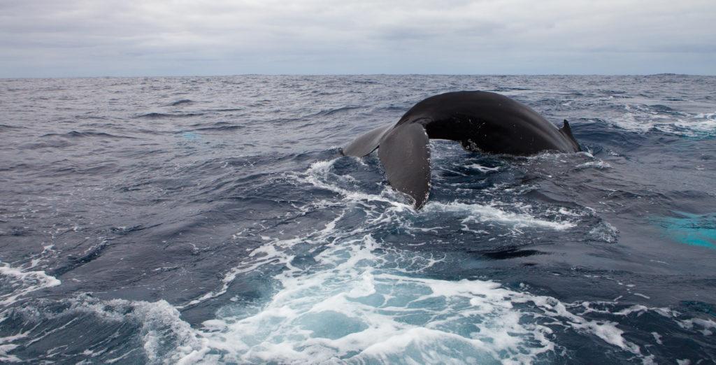 Whale 03:2015_26