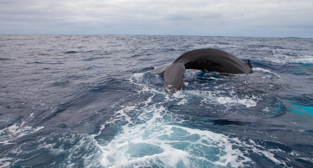 Whale 03:2015_27