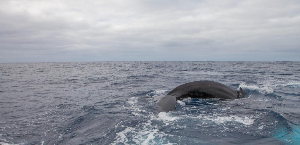 Whale 03:2015_28