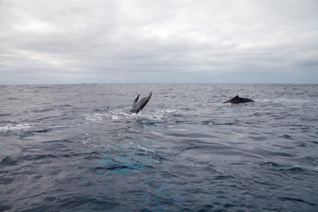 Whale 03:2015_3