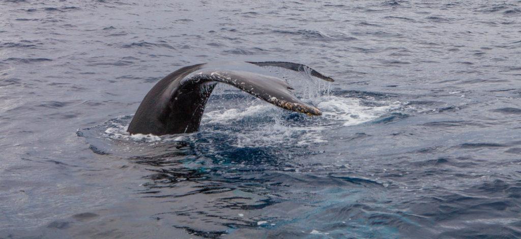 Whale 03:2015_4