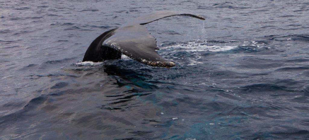 Whale 03:2015_5